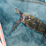 Why are Plastic Straws so Damaging to the Marine Environment?